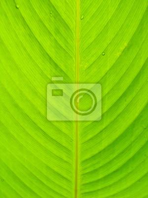 Nahaufnahme schöne grüne Blatt