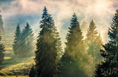 Nebel im Nadelbaum