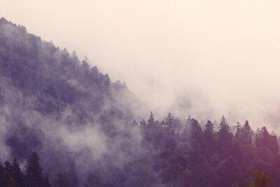 Sticker Nebel im Wald