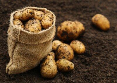 Sticker Neu geernteten Kartoffeln