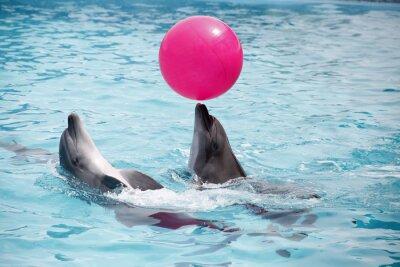 Sticker Niedliche Delphine während einer Rede am Delphinarium