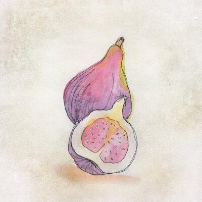 Sticker Obst Illustration mit Aquarell