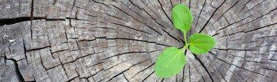 Sticker Ökologie-Konzept. Steigende Sprossenpflanze von altem Holz und symbolisiert den Kampf um ein neues Leben, Grenze Design Panorama Banner.