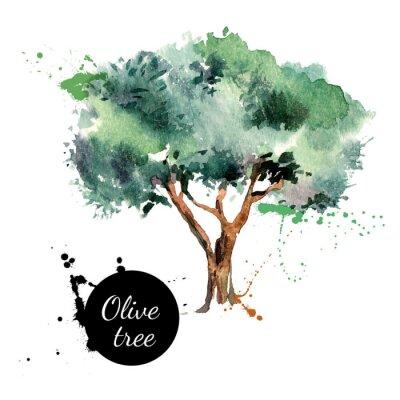 Sticker Olivenbaum Vektor-Illustration. Hand gezeichnet Aquarellmalerei
