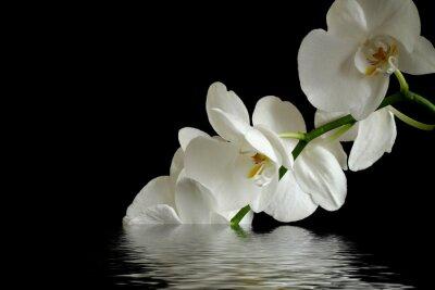 Sticker orchid flower reflexion