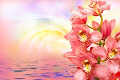 Sticker Orchidee Blume Nahaufnahme
