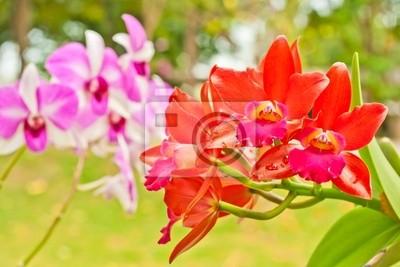Orchidee Blumen blühen im Garten