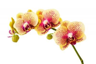 Sticker Orchidee Blumen isoliert auf weißem Hintergrund.
