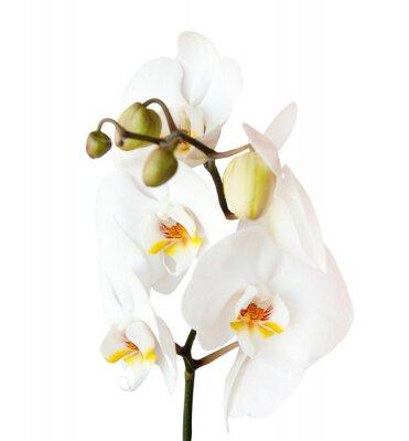 Sticker Orchidee, isoliert auf weißem Hintergrund