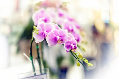 Sticker Orchideen