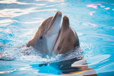 Sticker Paar Delfine tanzen im Wasser