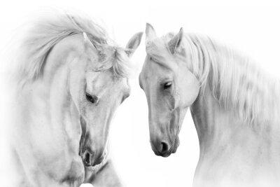Paare des Schimmels auf weißem Hintergrund