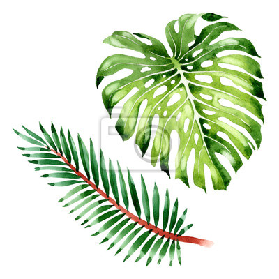 Palm beach tree leaves jungle botanical. Watercolor background illustration set. Isolated leaf illustration element.