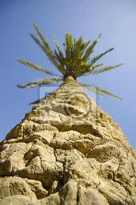Palme mit einer ungewöhnlichen Sicht