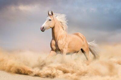 Palomino-Pferd mit langen blonden männlichen Lauf in der Wüste