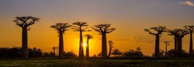 Sticker Panoramablick bei Sonnenuntergang über Baobab Allee