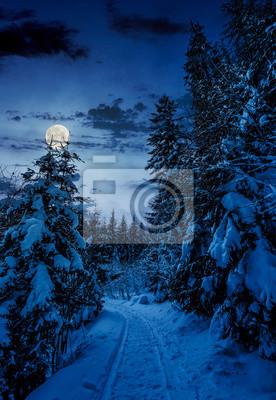 Pfad durch Fichtenwald im Winter. schöne Naturlandschaft mit schneebedeckten Bäumen in der Nacht in Vollmond Licht