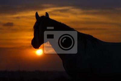 Pferd gegen Sonnenaufgang