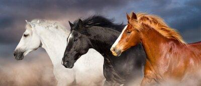 Pferd Herd Porträt laufen schnell gegen dunklen Himmel in Staub