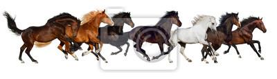 Pferd Herde laufen isoliert auf weiß, Banner für die Website