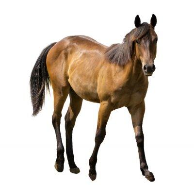 Sticker Pferd isoliert