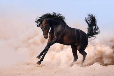 Pferd laufen Galopp
