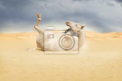 Pferd liegen in der Wüste