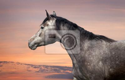 Pferd Porträt bei Sonnenuntergang