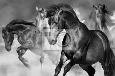 Pferd Porträt in Herde in Bewegung in Wüste Staub. Balck und weiß