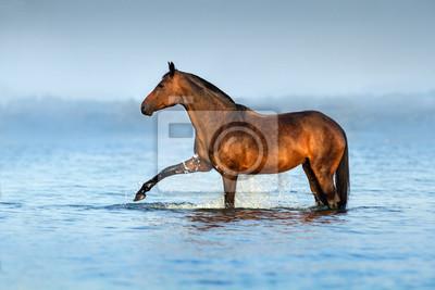 Pferd stehend in blauem Wasser mit splash
