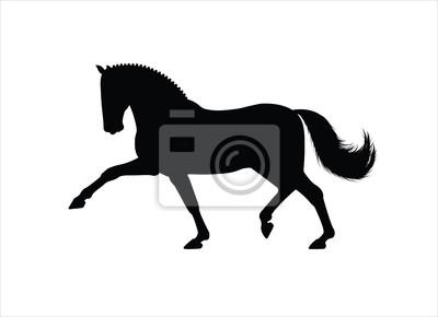 Pferd Trab