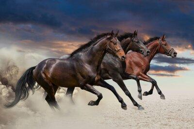 Pferde laufen im Galopp entlang der Sandfeld