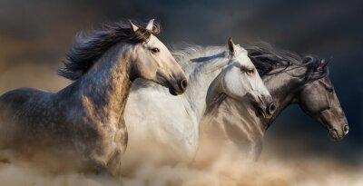 Pferde mit langem Mähnenportal laufen galoppieren in Wüstenstaub