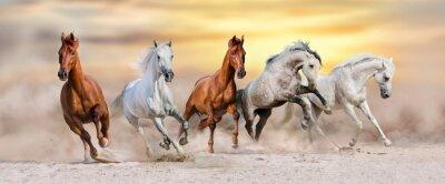 Pferdeherde laufen schnell in Wüstenstaub gegen dramatischen Sonnenuntergang Himmel