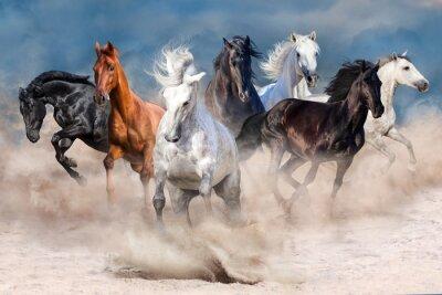 Pferdeherde läuft im Wüstenstaubsturm