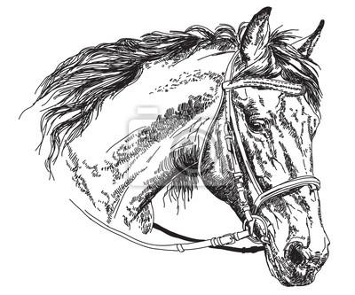 Pferdekopf mit Zaumzeug Vektor Handzeichnung Illustration
