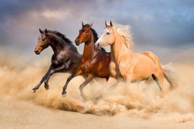 Pferdelauf