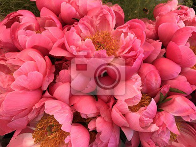 Pfingstrosen Schone Pfingstrose Rosa Blumenstrauss Notebook Sticker