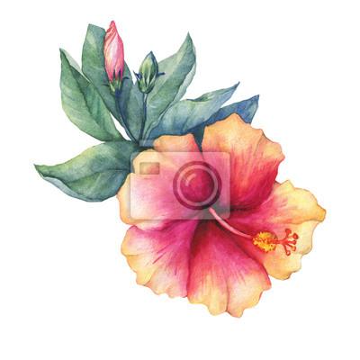 Pfirsich-rosa hibiskus-blume. hand gezeichnet aquarell malerei ...