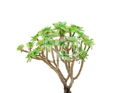 Pflanze im Topf isoliert auf den weißen Hintergrund