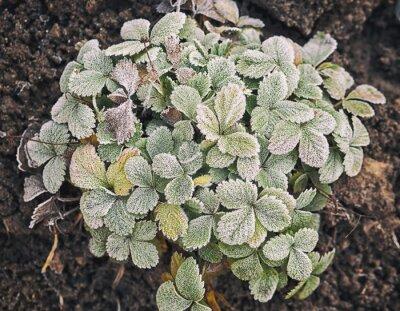Pflanzen sind mit Frost bedeckt