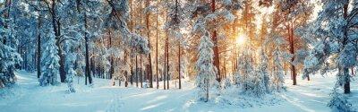 Sticker Pine Bäume bedeckt mit Schnee auf frostigen Abend. Schönes Winterpanorama