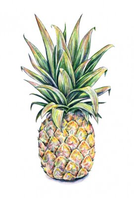 Sticker Pineapple on a white background. Watercolor illustration
