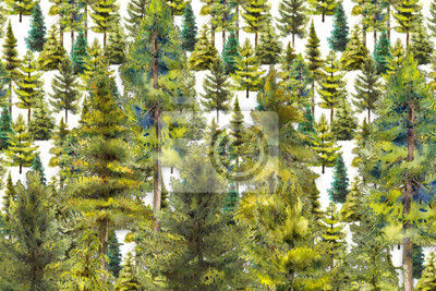pines and conifer forest watercolor