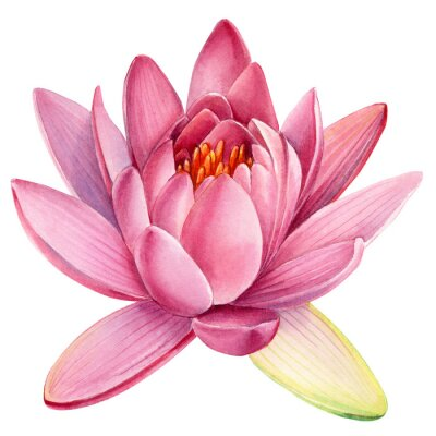 Sticker Pink lotus flower on an isolated white background, watercolor clipart, water lily