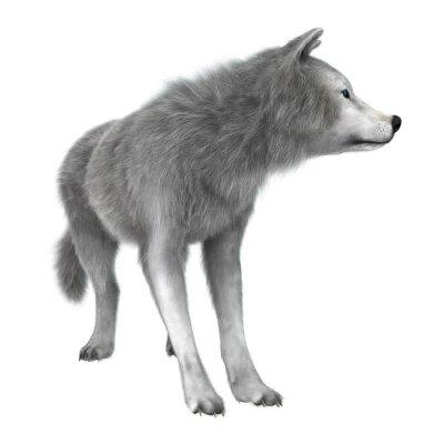 Sticker Polar Wolf auf Weiß