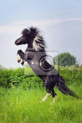 Pony stand in der Mitte der grünen Wiese