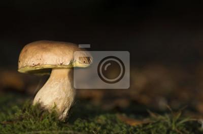 porcni mushroom