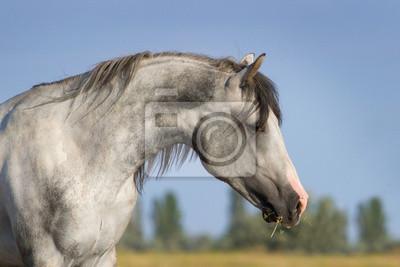 Portarait grauen Pferd
