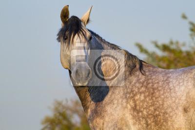Portrait of grey horse in morning sunlight